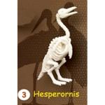 시조새뼈화석발굴 - 헤스페로니스