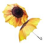 해바리기 우산 Sunflower umbrella