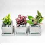 책상에 놓기 좋은 실내공기 정화식물+화분SET 22종 택1
