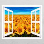 cc969-해바라기꽃밭_창문그림액자