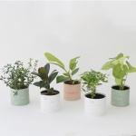 인테리어식물 5종