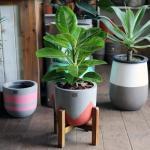뱅갈고무나무 중형화분 Nordic color premium pot(m)