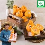 [농가실명제] GAP인증 육지봉(한라봉) 5kg/40과내외