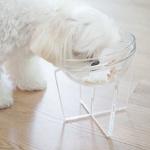강아지용품 강아지식기 고양이밥그릇