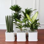 라운드 중형 화분 모음전 공기정화식물 12종