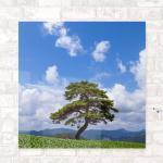 cr572-아크릴액자_건상의상징소나무(중형)