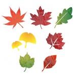 스텐실도안ST-481.가을낙엽이야기