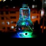 LED전구병 마리모 수경식물