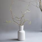 [디어먼트] 곱슬버들 그린 인테리어 식물