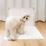 피터펫 강아지 배변판 화장실 중형 대형