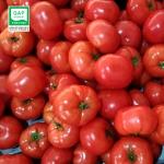 달향토마토 소과 4kg / GAP인증토마토