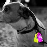 Reflector_Dog Name Tag
