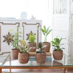 소형 라탄바구니 모음 실내공기정화식물 12종