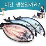 ★무료배송 [피쉬앤팬시] 생선필통 고등어필통