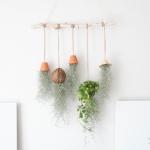 먼지먹는식물 수염틸란드시아