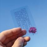 투명 원고지 책갈피 한국 시인 시를 담은 꽃 북마크