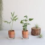 미니수경 아레카야자 아이비 공기정화식물