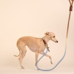 (TWO TONE) SMART LEASH_BLUE COCOA