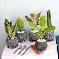 엔틱 화분 모음 실내공기정화식물 12종