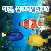 ★무료배송 [피쉬앤팬시] 생선필통