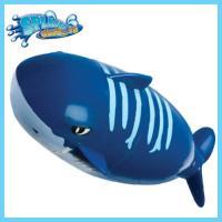 [스플래쉬대셔] 블루상어