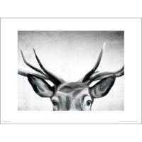 PDH01398 Deer Eyes (40x50)