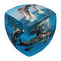 2x2 돌고래 큐브 (라운딩) - 베르데스
