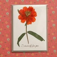 [향기카드] 압화 미니카드 - 주황꽃