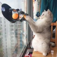 바우미우펫 부착식 발장난 고양이 롱트랙