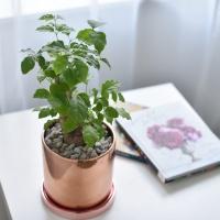 해피트리 녹보수 공기정화 식물 화분