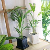 몰딩 화분 아레카 공기정화식물