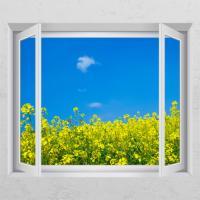 cd342-유채꽃밭_창문그림액자