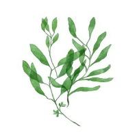 [DIY명화]Q3224 Leaf(잎) size 40*50cm
