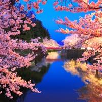 [챔버아트] A1146 벚꽃야경 1000조각 직소퍼즐