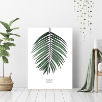 [오홀리브] 코코넛잎
