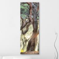 ct785-거대한소나무숲_대형노프레임