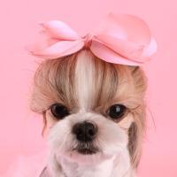 모모핀 핑크
