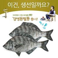 ★무료배송 [피쉬앤팬시] 생선필통 감성돔필통