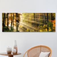ct777-햇빛가득머금은숲_대형노프레임