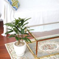 테라조 화분 관음죽 중형 공기정화식물