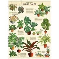 카발리니 포스터-House Plants