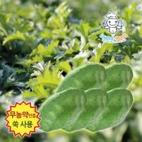 [엔젤쿡] 자연담은 거문도 해풍쑥 생쑥송편 1kg AGCGSM0201