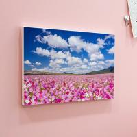 ah874-캔버스액자33.4x24.2_분홍코스모스꽃밭