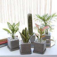 루체 화분 모음 공기정화식물 10종