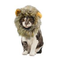 고양이 사자 후드 Cat's lion hood