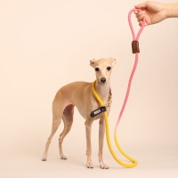 (TWO TONE) SMART LEASH_YELLOW PINK