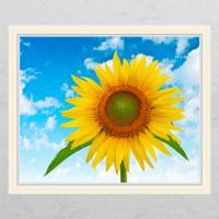 cd333-푸른하늘해바라기02_창문그림액자