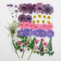 퍼플데이지 꽃모음(압화-누름꽃)