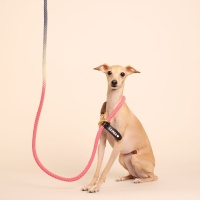 (TWO TONE) SMART LEASH_PINK NAVY