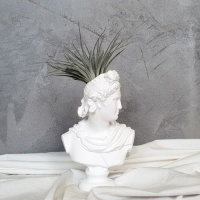석고상화분 틸란드시아 휴스톤+모스+리본 포함